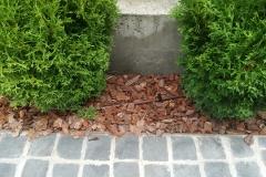 Kapiliarinis vamzdis prie augalų